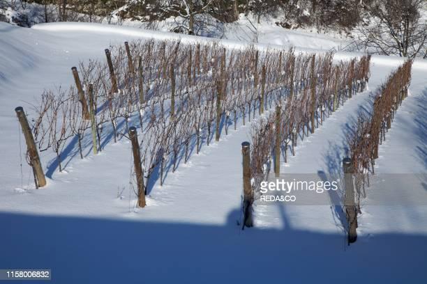 Panoramica su paese di Mori in Winter Vallagarina trentino