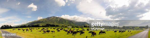 panoramic-ranch in south island new zealand - south island new zealand stock pictures, royalty-free photos & images