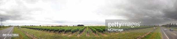 Panoramic-vineyard of South Island,New Zealand