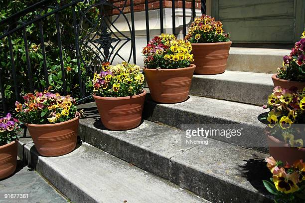 pansies in pots flanking the stairway