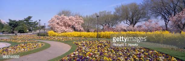 Pansy Park