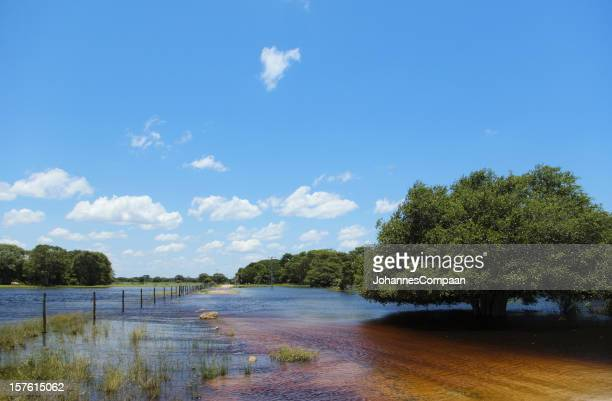 pantanal wetlands, brazil - mato grosso state stock pictures, royalty-free photos & images