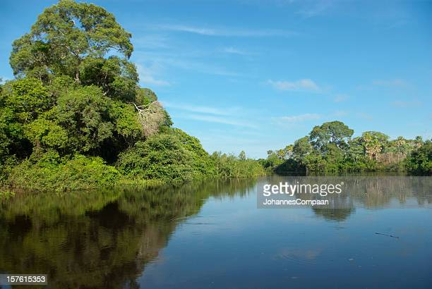 pantanal wetlands, brazil - mato grosso do sul state stock pictures, royalty-free photos & images
