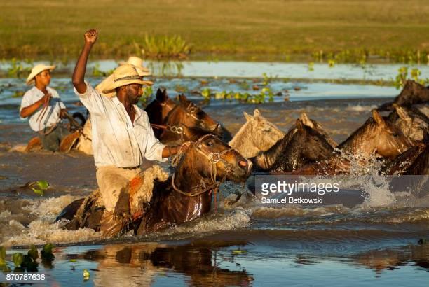 pantaneiros com uma manada de cavalos nadando em um rio - billabong water stock photos and pictures