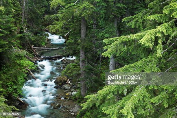 Panther Creek running through forest, Mount Rainier National Park, Washington, USA