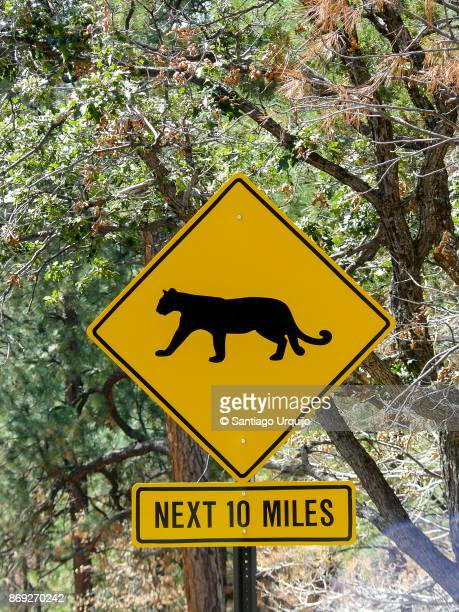 panther road sign - animal crossing stock pictures, royalty-free photos & images