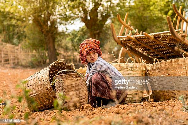 pa'o tribe woman farming ginger - merten snijders stock pictures, royalty-free photos & images