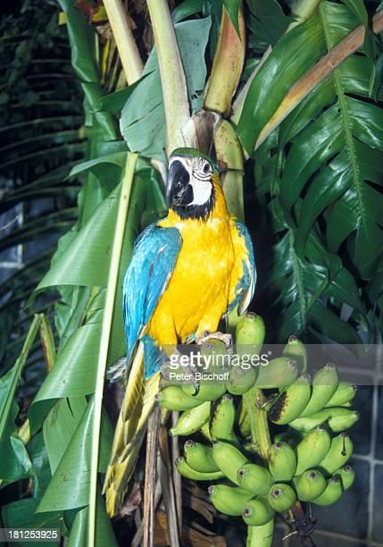 Papagei PRO 7 Serie 'Glueckliche Reise ' Folge 24 'Puerto Rico' San Juan/Karibik/USA Episode 3 'Der Vogelkundler und der 'entfuehrte'...