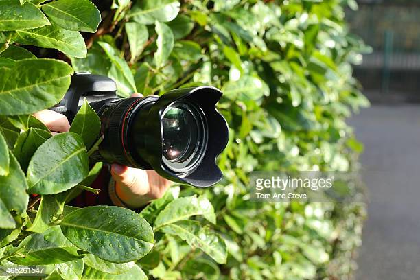 Paparazzi photographer spying out of bush