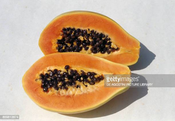 Papaya or Papaw cut in crosssection Caricaceae