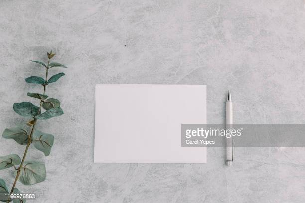 paper blank, eucalyptus branches - kitchen counter stock pictures, royalty-free photos & images