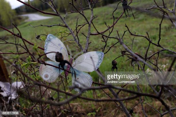 A paper butterly memorial decorates a road sign on Canada's Route 16 on April 24 2016 about 18 miles north of the town of Smithers British Columbia...