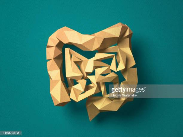 paper craft colon - intestine stock pictures, royalty-free photos & images