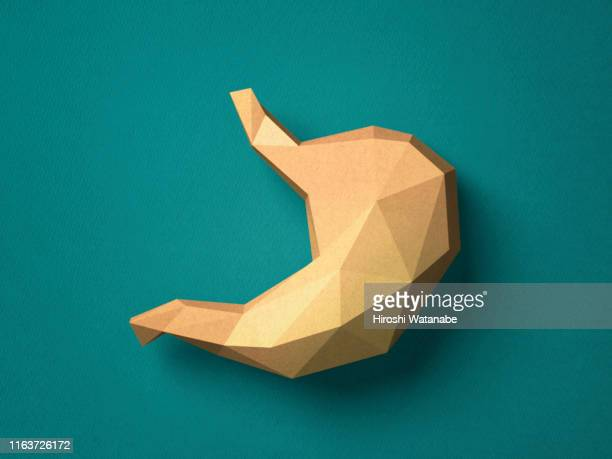 paper craft stomach - digestive system stock pictures, royalty-free photos & images