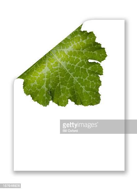 Paper curling showing green leaf