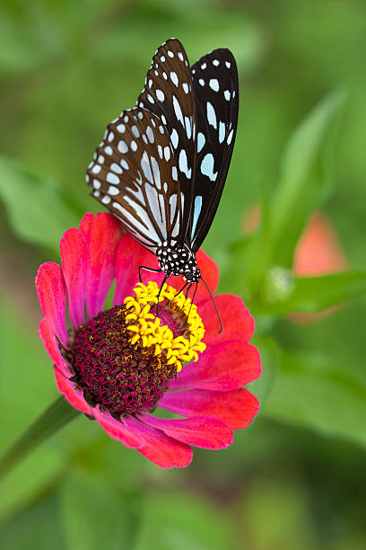Paper Kite Butterfly On A Wild Flower Wall Art
