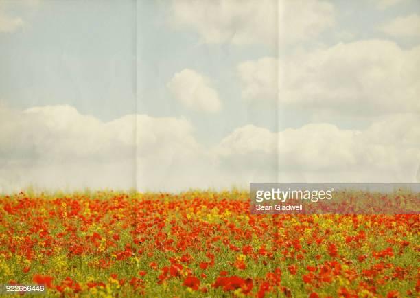 paper poppy field - coquelicot photos et images de collection