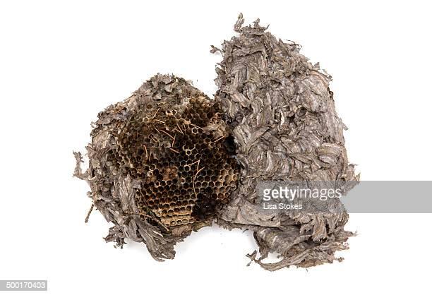 paper wasp nest - nido di vespe foto e immagini stock