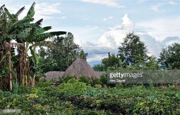 papua hut roof - shack stock pictures, royalty-free photos & images