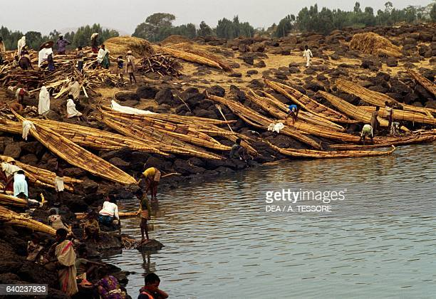 Papyrus boats lining the shore of Lake Tana Ethiopia