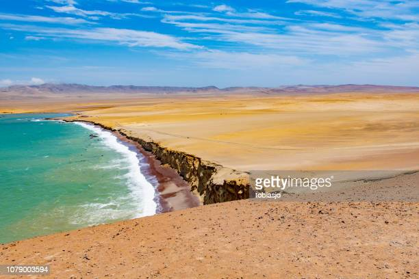 paracas national reserve - lima animal stock pictures, royalty-free photos & images