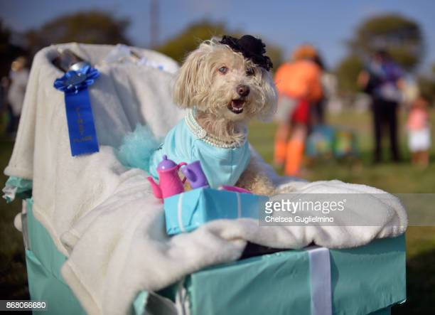 A parade finalist is seen during the Haute Dog Howl'oween Parade on October 29 2017 in Long Beach California