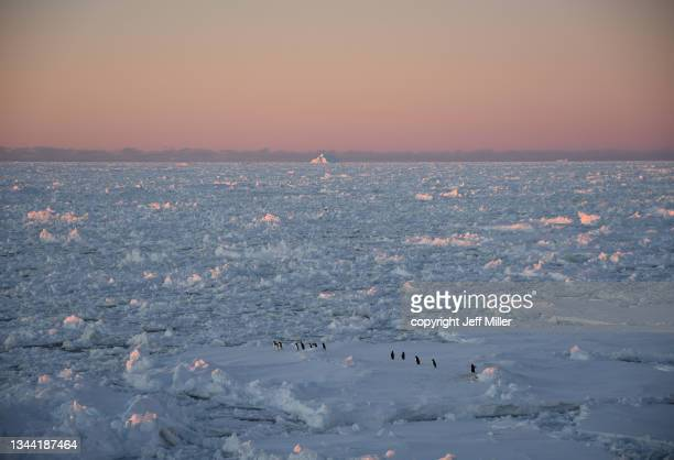 a parade of adélie penguins (pygoscelis adeliae) traverse pack ice at sunset, southern ocean, antarctica. - pack ice stock pictures, royalty-free photos & images