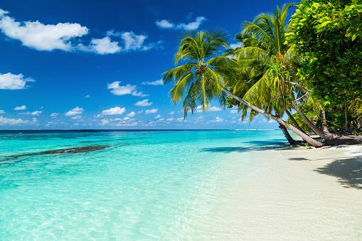 paradise beach 509488176