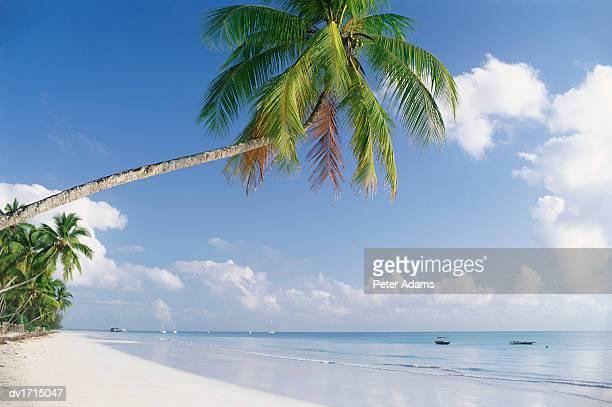 paradise beach, zanzibar, tanzania, africa - zanzibar stock pictures, royalty-free photos & images