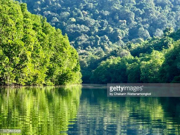paradise in ko kut island (koh kood) - the beautiful scenery of mangrove jungle in klong chao canal, ko kut island (koh kood). - golf von thailand stock-fotos und bilder