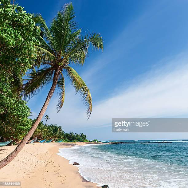 Paradies-tropische Strand, Sri Lanka