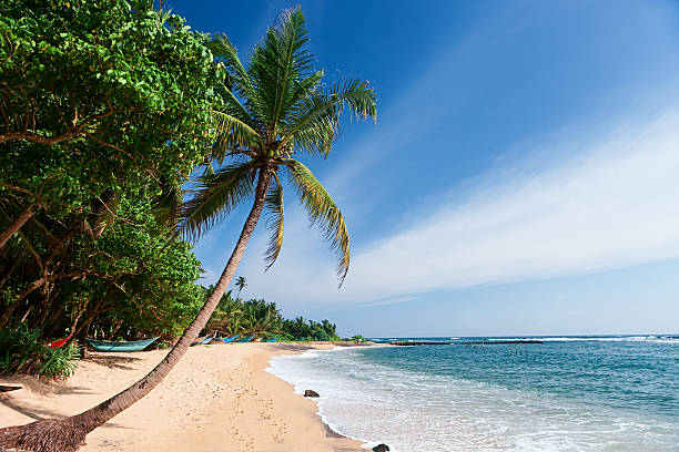 """Paradise - tropical beach, Sri Lanka"""