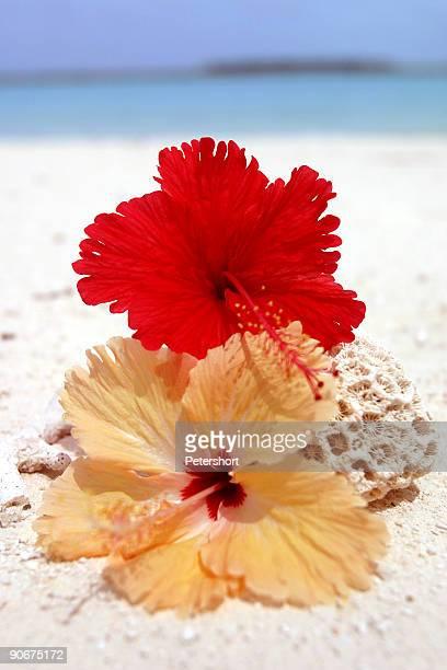 Paradise_flower