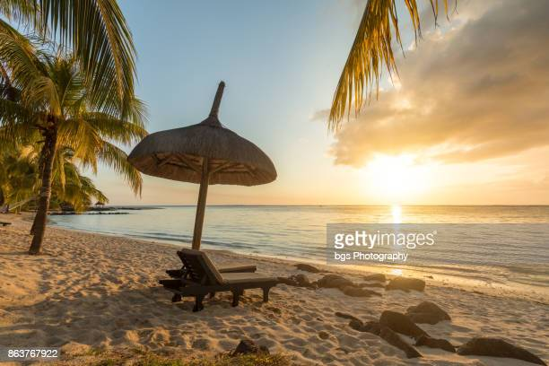 Paradisiac and Desert Island, white sand Beach, Palm tree at Sunset