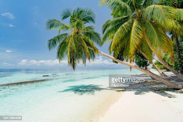 paradisiac beach at maldives - maldives stock pictures, royalty-free photos & images