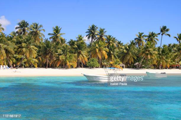 paradisiac beach at punta cana, dominican republic - tropical tree stock pictures, royalty-free photos & images
