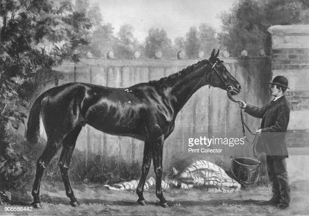 'Paradox' 1911 Paradox was a British Thoroughbred racehorse and sire From British Sports and Sportsmen Part 1 [British Sports and Sportsmen London...