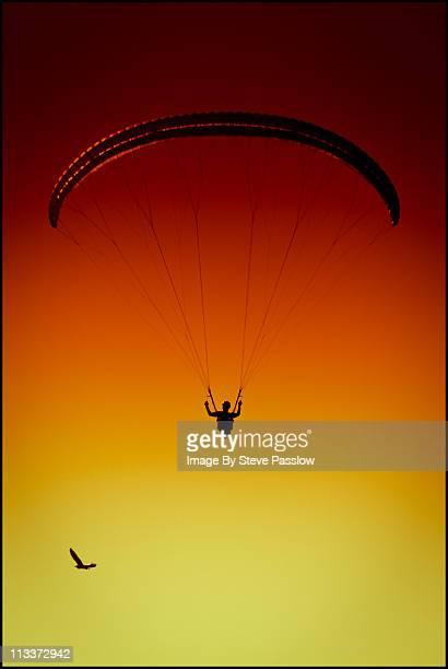Paraglider and Sea Eagle flying together