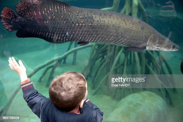 Parc zoologique de Paris-Vincennes, enfant devan l'aquarium.