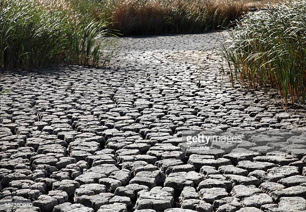 Parched earth with cracked riverbed