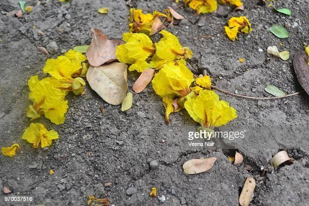 Parched/cracked Earth-Summer-Maharashtra