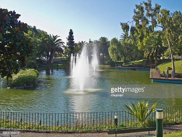 parco santa caterina, funchal, madeira, portugal - madeira island stock photos and pictures