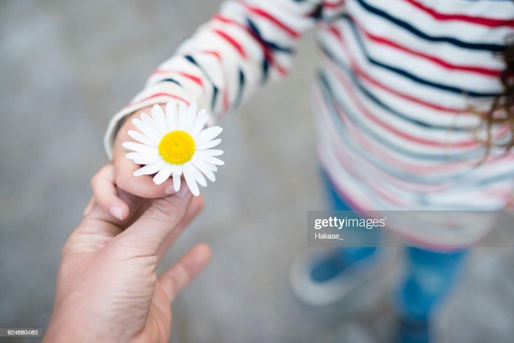 Mãos de pai e filho entrega flor branca : Foto de stock