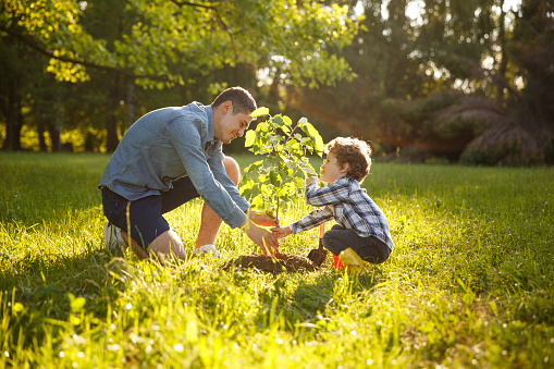 Parent and child planting tree 815091350