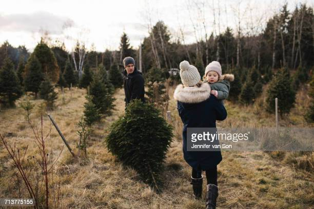 Parents and baby girl in Christmas tree farm, Cobourg, Ontario, Canada