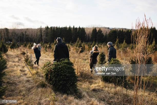 Parents and baby girls in Christmas tree farm, Cobourg, Ontario, Canada