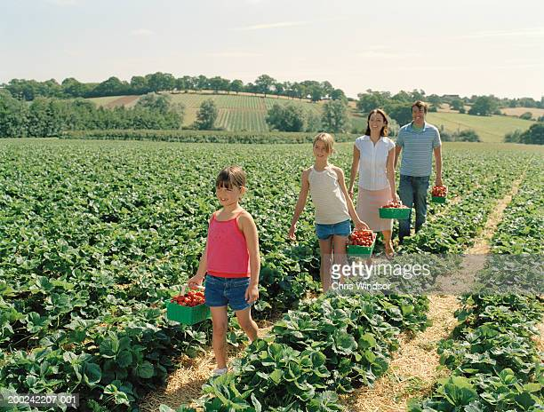 Parents and children (7-11) in field with punnets of strawberries