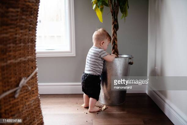 parents watching baby daughter take first steps at home - one baby boy only stock pictures, royalty-free photos & images