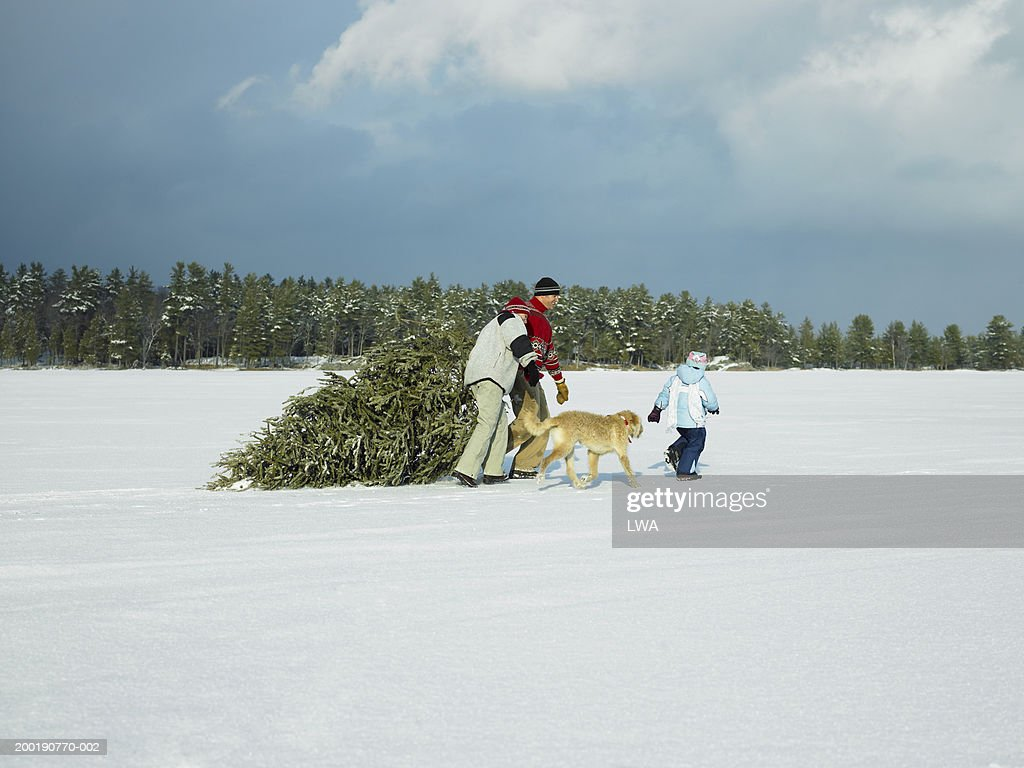 Parents With Daughter And Dog Hauling Christmas Tree Over Snow High-Res  Stock Photo - Getty Images