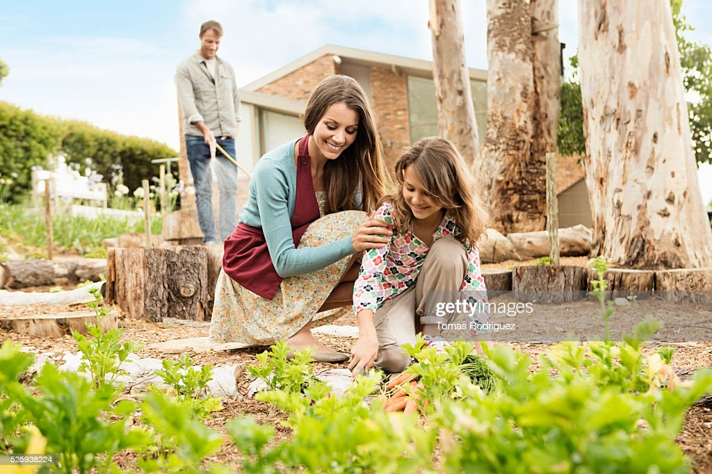 Parents with daughter (8-9) in vegetable garden : Bildbanksbilder